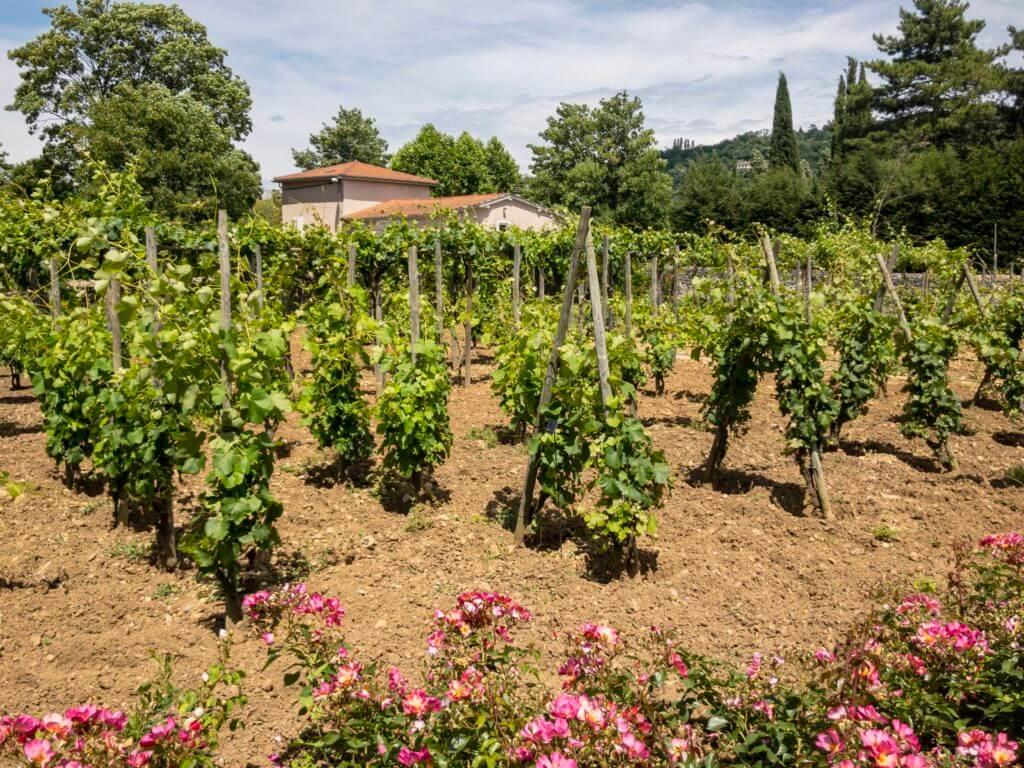 ガロ・ローマ博物館のワイン